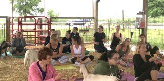 Updog Yoga Studio