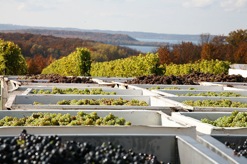Chateau Grand Traverse Grape Bins