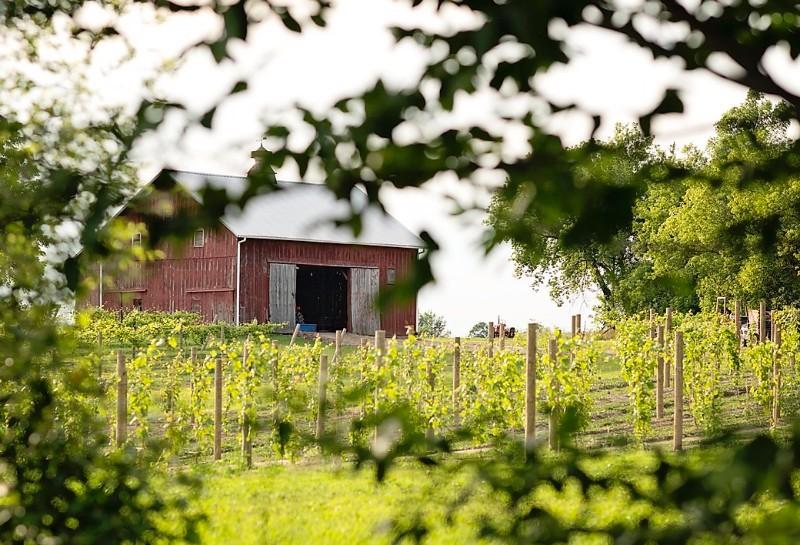 Stoney-Ridge-Vineyards